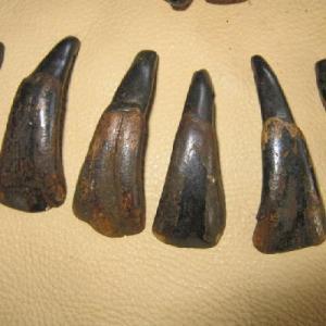 Arc 114b dents buffalo buffle bison collier prehistorique achat vente